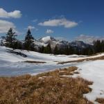 Die Krokusse - kommen gleich nach dem letzten Schnee
