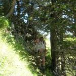 Urromantische Steige führen zum Großen Bären - Berg im hinteren Großarltal