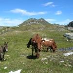 Almsommerliche Tierwelt unter dem Schöderhorn