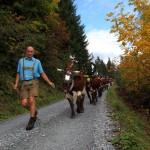 Richard führt seine Herde sicher ins Tal