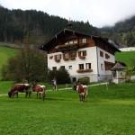 Wieder daheim am Aubauernhof in Großarl