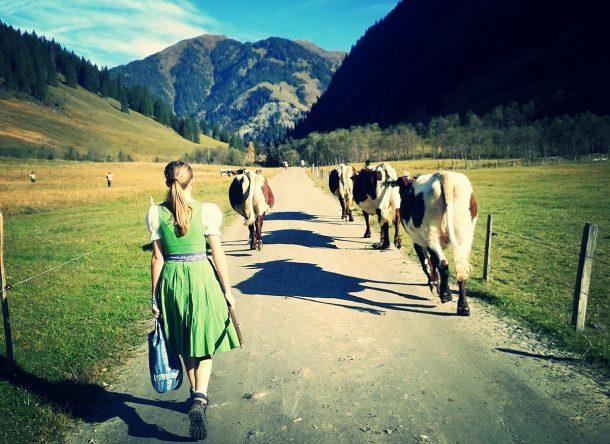 Ich auf der Alm beim Kühe holen