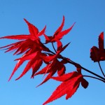Herbst im Großarltal