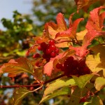 Bunte Blätter im Herbst