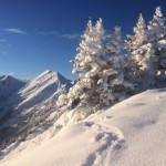 Winterlich hergerichtete Bäume entlang unserer Familienabfahrt