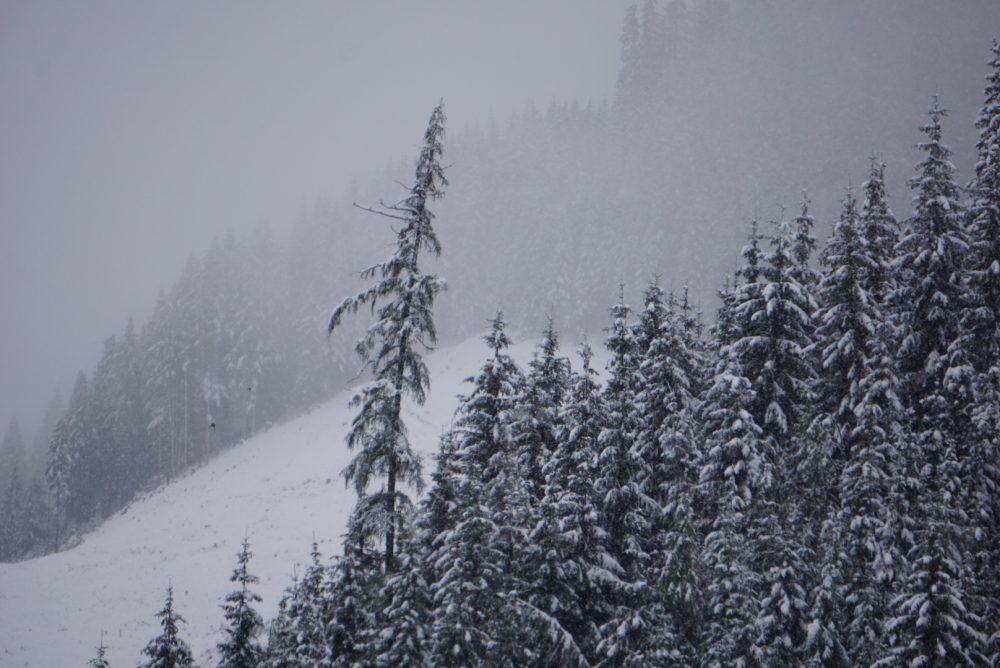 Winterwald im Großarltal