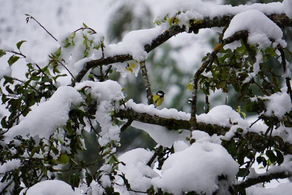 Schneefall im Großarltal im Salzburgerland