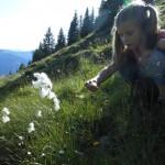 Anna vom Wollgras inspiriert