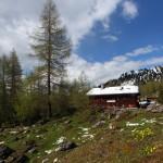Die Filzmoosalm (1.710 m) im Großarltal, zwischen Schnee und Blumen