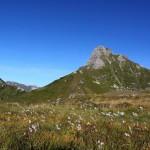 Feuchtwiese am Weg zur Filzmooshöhe