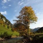 Herbst an der Großarler Ache in Hüttschlag 2