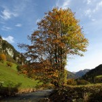 Herbst an der Großarler Ache in Hüttschlag 4
