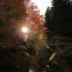Herbst an der Großarler Ache 1