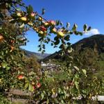 Vom Obstgarten des Reitbauern ...