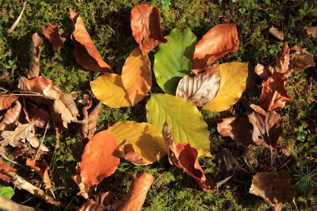 Herbstlicher Waldboden
