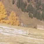 Hirsch im Skigebiet Großarltal