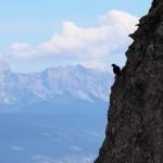 Bergdohle vor dem Abflug