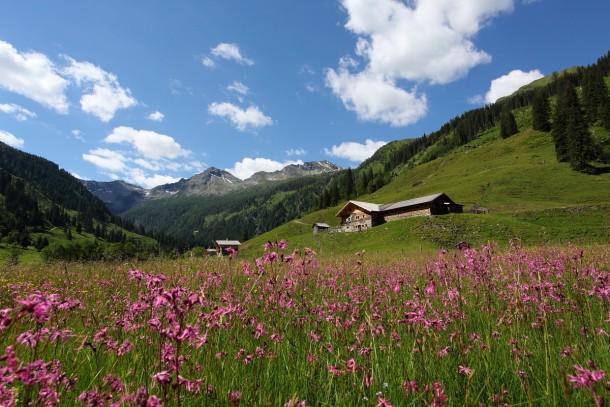 Kuckuckslichtnelken tauchen das Tal in kräftiges rosa