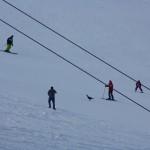 Seltener Anblick für Skifahrer - Auerhahn auf der Piste im Großarltal