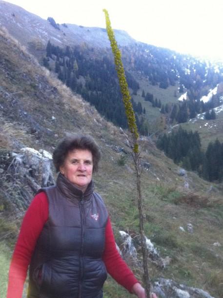 Anna, meine Mama und Sennerin der Karseggalm unterhalb der Kitzsteingabel mit einer Königskerze von mindestens 2,5 Meter Höhe.