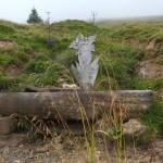 Wegbegleiter ist heute der Enzian - das Symbol vom Salzburger Almenweg