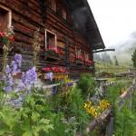 Bunte Blumenpracht an der Maurachalm