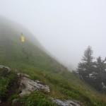 Weithin sind trotz Nebels die gelben Schilder gut sichtbar