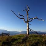 """Das neue """"Natur-Kreuz"""" am Vorgipfel der Gabel - gefertigt aus einer alten Lärche"""