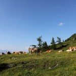 Kühe oberhalb vom Paarsee