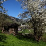 Baumblüte beim Reitbauer, Blick zur Pfarrkirche Großarl II