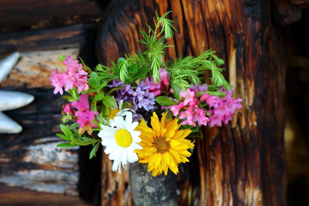 Blumen Almsommerhütte