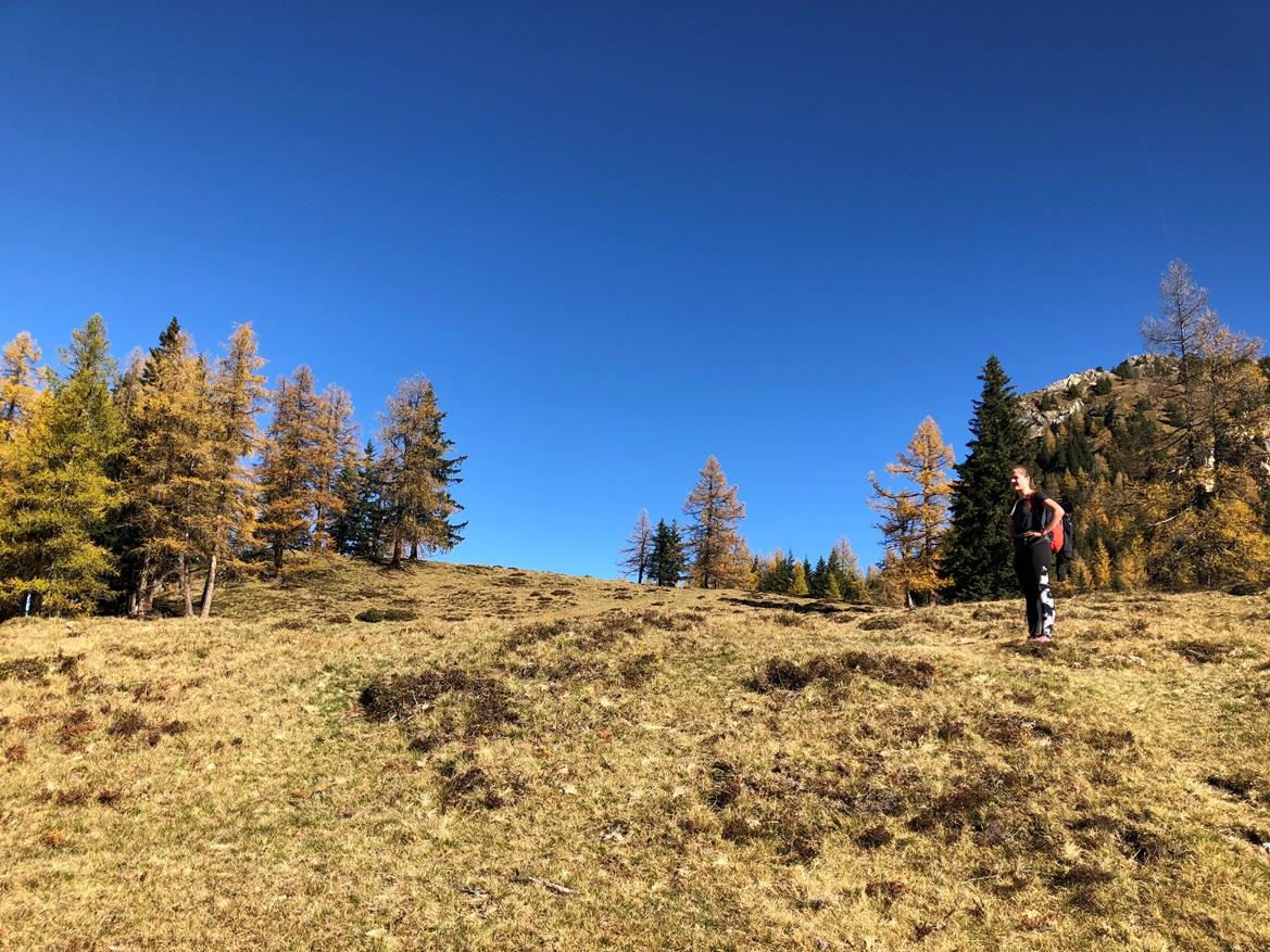 Die Lärchen am Saukar am 26. Oktober 2018. Schon gut verfärbt und teilweise abgenadelt. (Fotos: Josef Gruber)