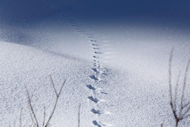 Winterstimmung im Großarltal - Foto: Thomas Wirnsperger