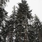 Schneeschuhwanderung Grossarl