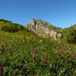Alpen-Süssklee im Igltal