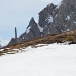 Alpenschneehuhn zu entdecken