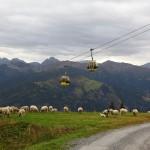 Am Rückweg vom Kreuzkogel haben uns diese Schafe ein Stück des Weges begleitet