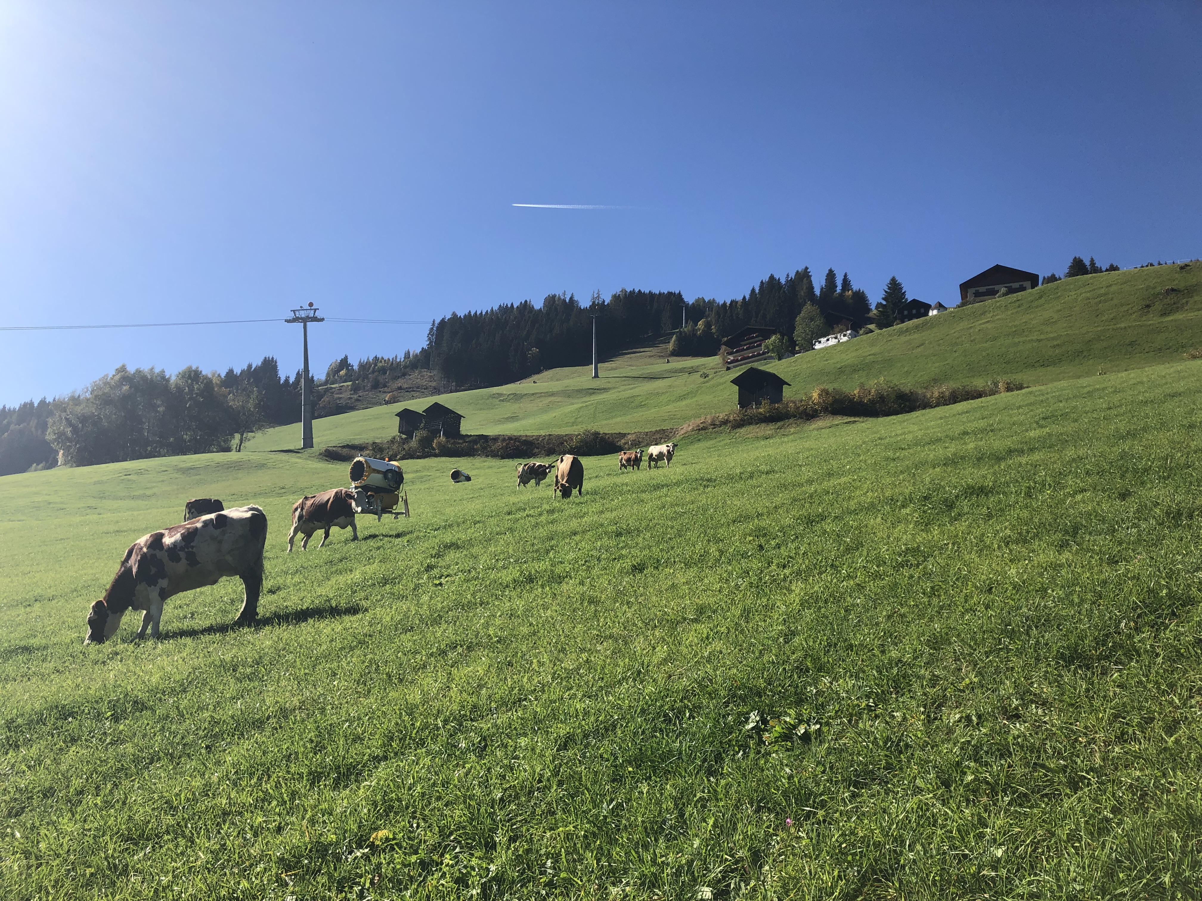 """Die Kühe des """"Roslehenbauern"""" mit den auf der Talabfahrt in Großarl positionierten Schneigeräten."""