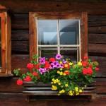 Herrliche Blumen zieren das Talmuseum