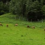 Die Hirsche im Gehege kümmert das alles wenig, sie genießen die Ruhe