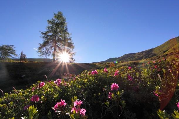 Die wärmenden Sonnenstrahlen lassen die Blumen in besonderem Licht erstrahlen
