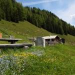 Viehhausalm