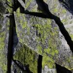 Endlos viele Steine - jeder für sich ein Unikat, gezeichnet von Flechten