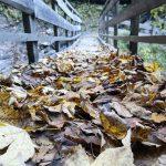 Blätter im Herbst in Grossarl