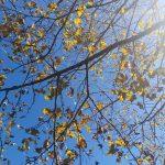Herbstbäume Grossarl