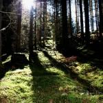 Zauberhafter Märchenwald