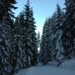 Verschneite Bäume auf der Skiroute 11