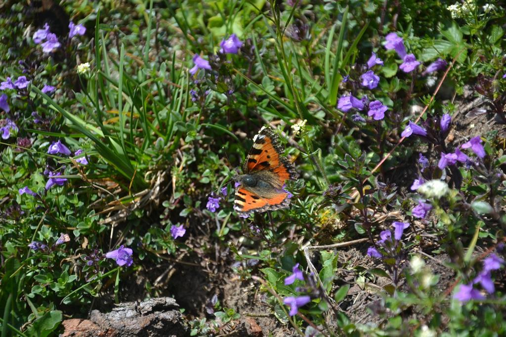 berg_gesund_alpine_flower_hike, Großarl