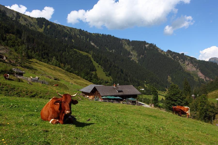 almfahrt_aigenalm_paulhutte_1280_m, Großarl
