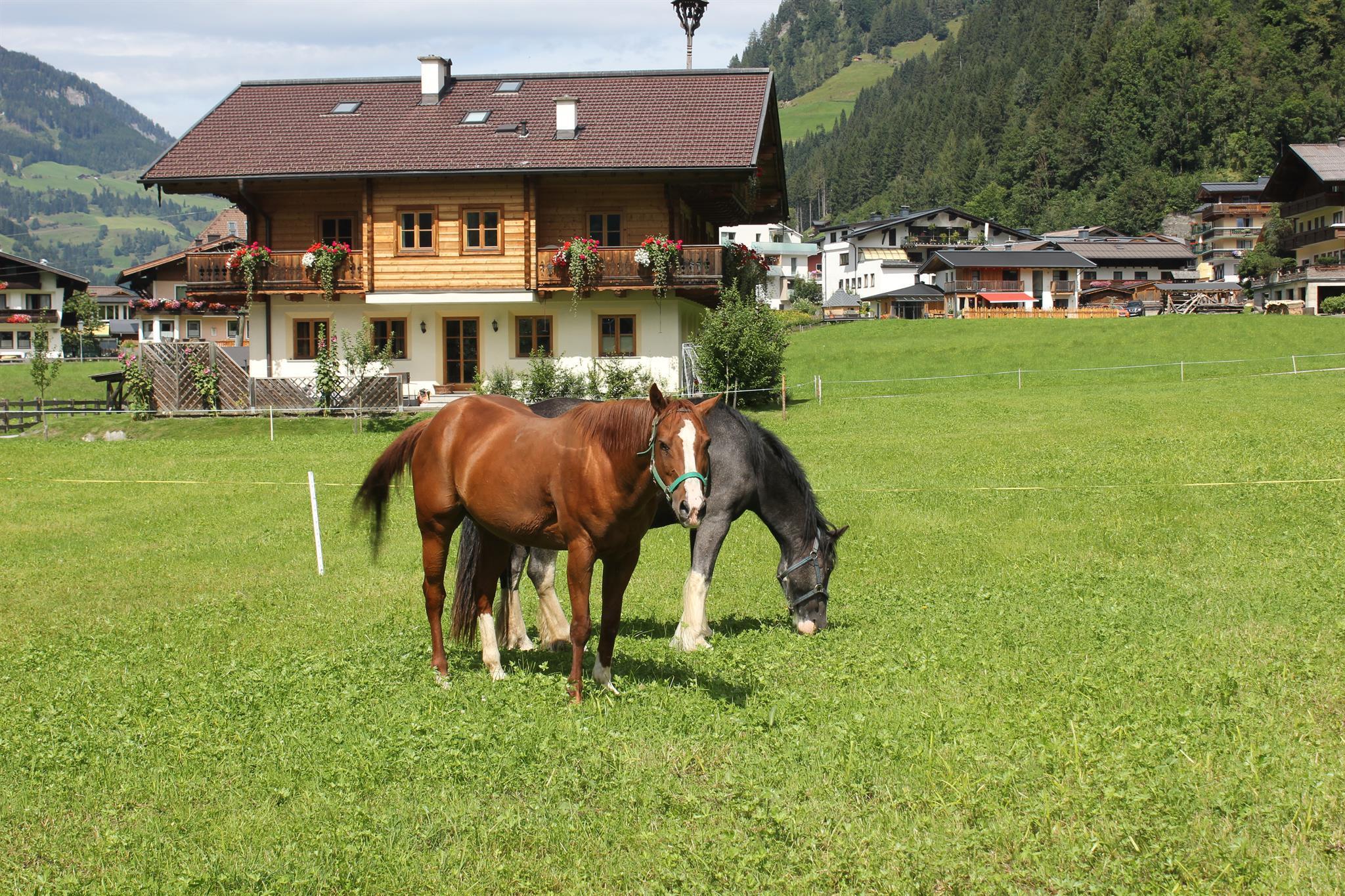 reiten_beim_astlhof, Großarl